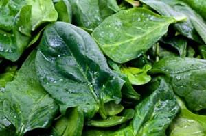 espinafre-guia-beneficios-receitas